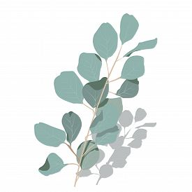 Vector Stock Illustration Of Eucalyptus Leaves. Delicate Tropical Leaves For The Bride's Bouquet. A