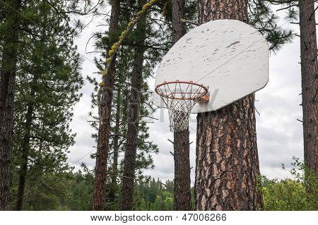 Pine Tree Basketball Hoop