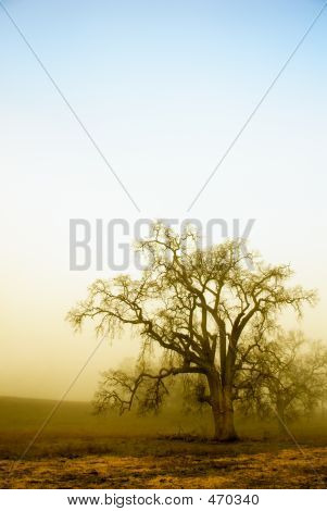 Misty Oaks Below, Blue Sky Above