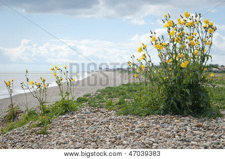 Suffolk Gravel Beach