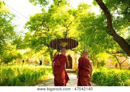 Two little Buddhist monks walking outdoors under shade of green tree, rear view, outside monastery, Myanmar.