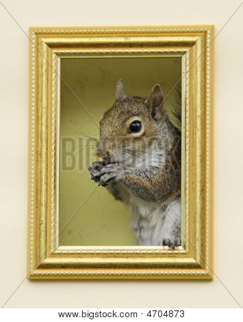 Squirrel In A Frame