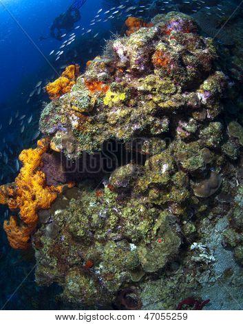 St Lucia Reef Scene