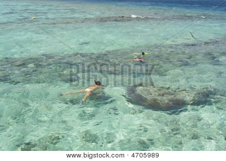Snorkelling In The Maldives Islands