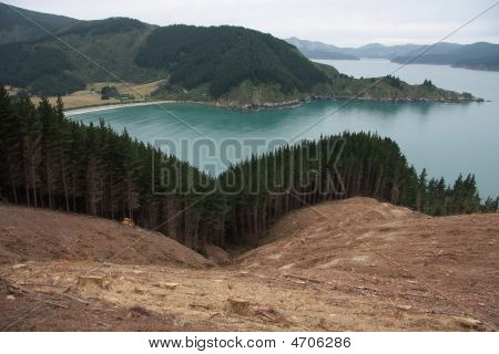 Forrest Logging, Picton New Zealand