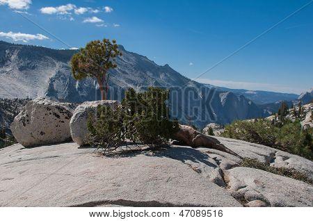 Trees And Glacial Erratic Boulders In Yosemite