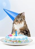 Cat Happy Birthday party with cake and candle poster