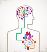 Brain and heart connected infographic poster