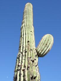 Cactus On Blue Sky