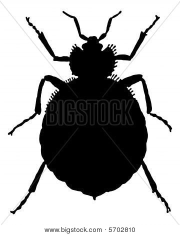 The Black Silhouette Of A Bedbug As Illustration