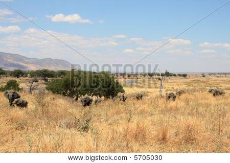 Savanna landscape with elephants