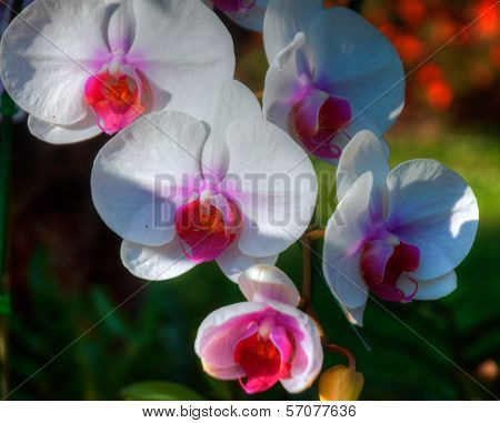 Close up of the wild Orchid Flower poster