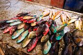 Colorful beachside fish stall at the Sea Gypsy village in Rawai, Phuket, Southern Thailand poster