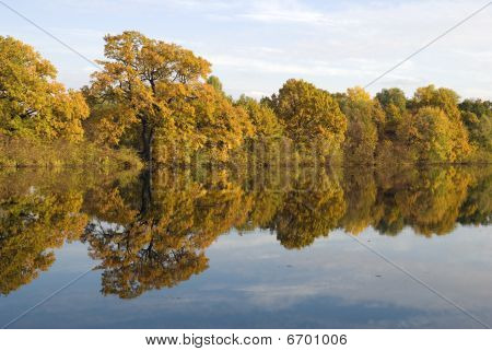 Reflection Of Yellow Trees In Water