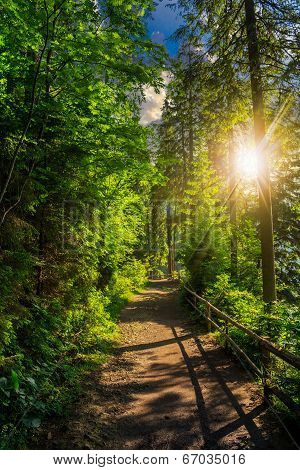 Morning Walks In Forest