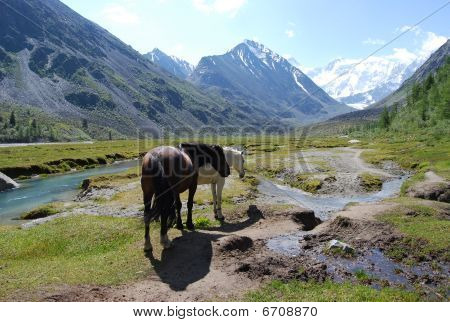 two horses near the mountain river in summer