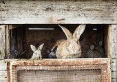 Mother rabbit with newborn bunnies