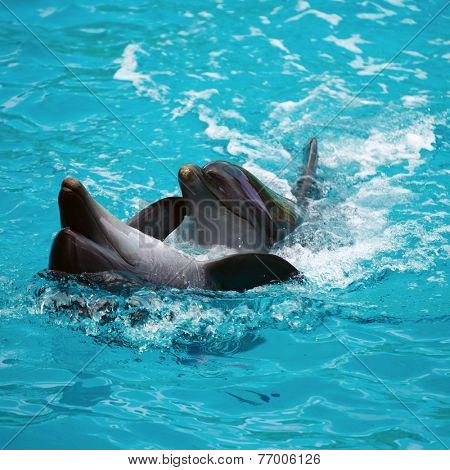 Two dolphins close up. Adler. Sochi