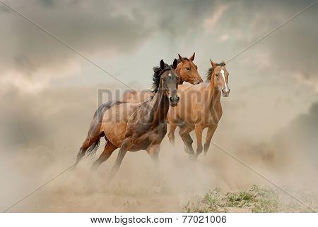 Horses Herd In Dust