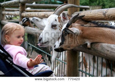 Little baby and goats. Zoo. Nuremberg. poster
