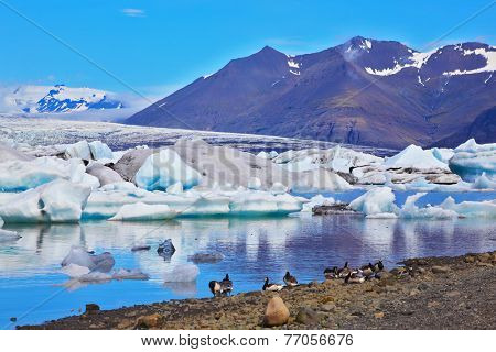 J���¶kuls���¡rl���³n Glacial Lagoon in Iceland. Drifting ice floes and flying geese are reflected in an ocean lagoon