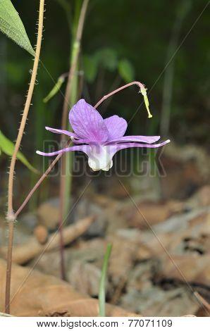 Flowers Of Barrebwort