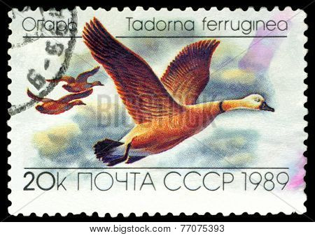 Vintage  Postage Stamp. Tadorna  Ferruginea.  Ducks.