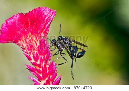 Insects on a flower.
