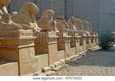 Avenue of ram-headed sphinxes in Luxor, Egypt