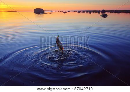 Sunset River Perch Fishing With  A Rod
