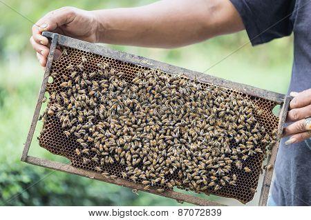 Hands Holding Honeycomb