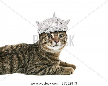 Cat in a tin foil hat looking up