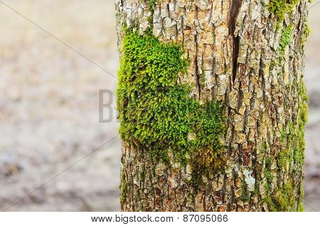 Green Moss On A Tree Trunk