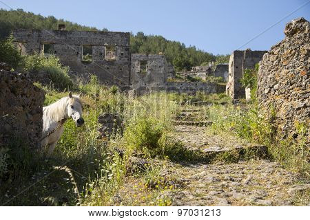 White Horse Looking At Camera In A Ghost Town Village Kayakoy Ruins Near Fethiye In Turkey