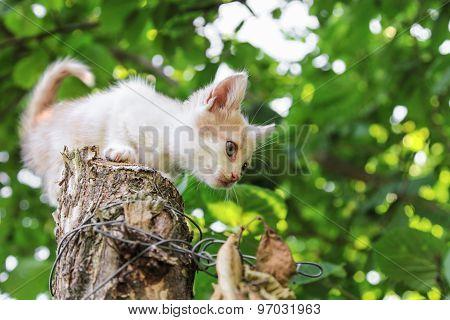 Kitten Sitting On Tree