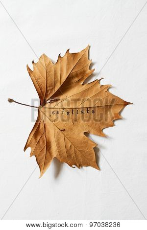 Exfoliate Word Printed On Dead Autumn Leaf