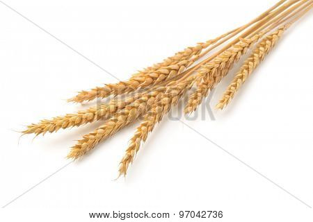 Ripe  wheat ears isolated on white