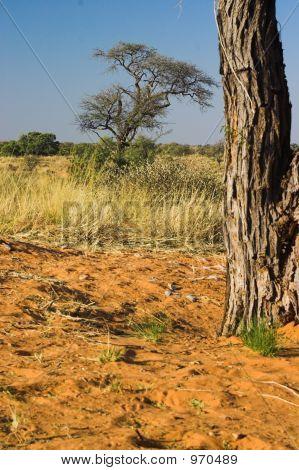 Kalahari View