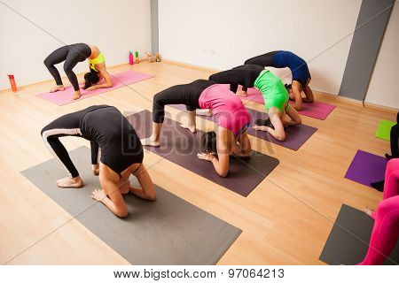 Yoga Students Following Instructor