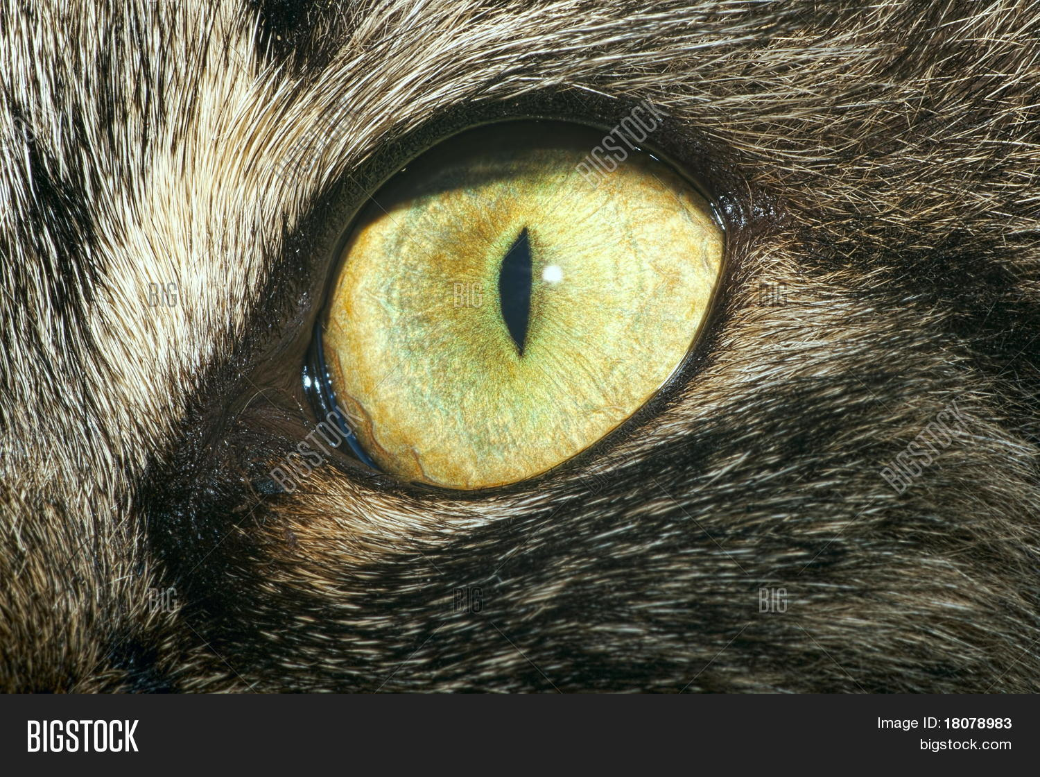 Extreme Close Cats Image Photo Free Trial Bigstock