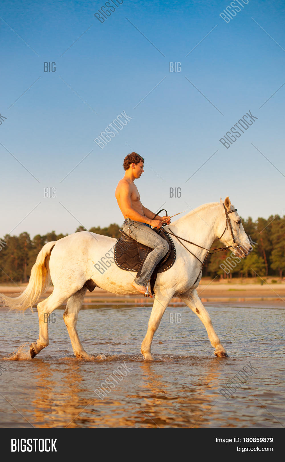 Macho Man Horse On Image & Photo (Free Trial) | Bigstock