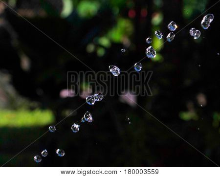Water drops on garden background. Aqua drops flying in air. Rain drops on dark green natural backdrop. Transparent and clear water beads. Watering garden from hose. Water supply stream macro photo