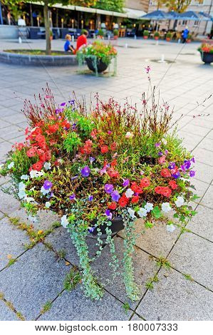 Flowers In Blossom On Streets Of Vilnius