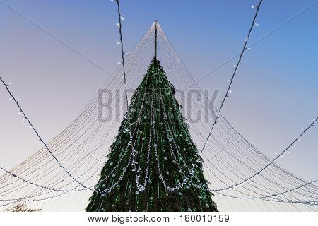 Christmas Tree With Garlands Installed In Vilnius In The Evening