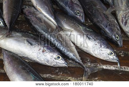 Sea fishes closeup on seafood market. Fresh sea fish for sell. Small mackerel pile top view photo. Marine fish mackerel image. Seafood market shop. Raw fish cooking ingredient. Seaside food for cook