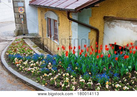 Tulip Flowers Blossoming In Street Garden Of Cesky Krumlov