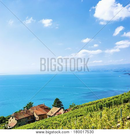 Swiss Village At Lavaux Vineyard Terraces Hiking Trail In Switzerland