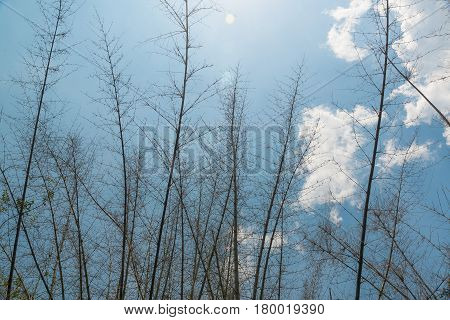 Tree and blue sky in vintage tone with vignetting