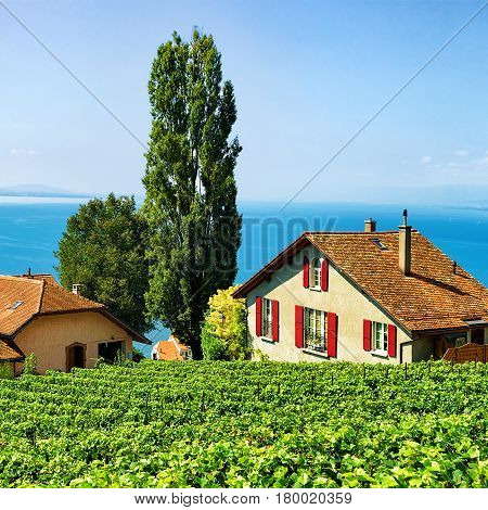 Swiss Chalets At Vineyard Terraces Hiking Trail Of Lavaux Switzerland