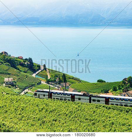 Train In Vineyard Terraces In Lavaux Near Lake Geneva Alps
